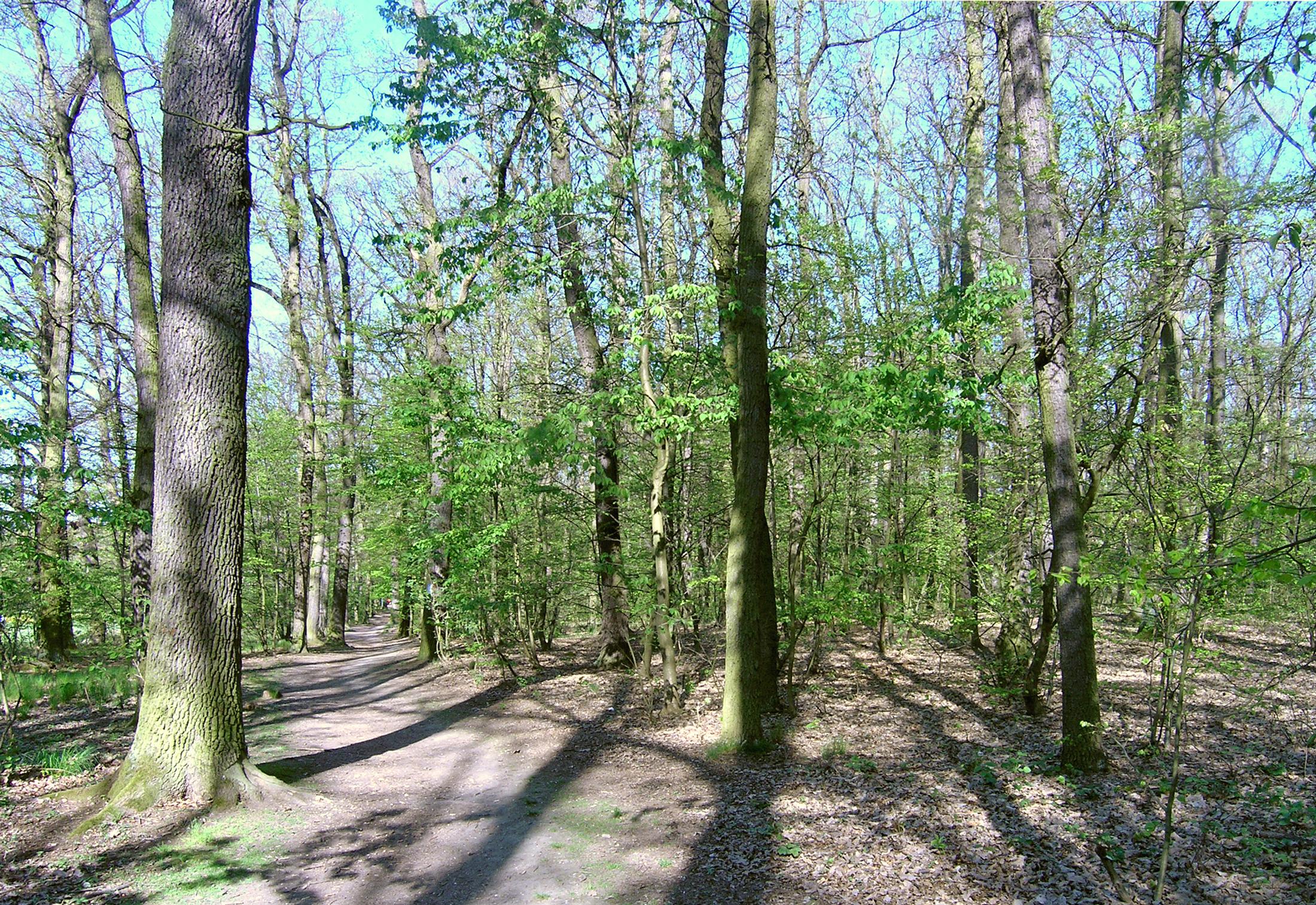 Milíčovský les (Czech Wikipedia user Packa, CC BY-SA 2.5 <https://creativecommons.org/licenses/by-sa/2.5>, via Wikimedia Commons)