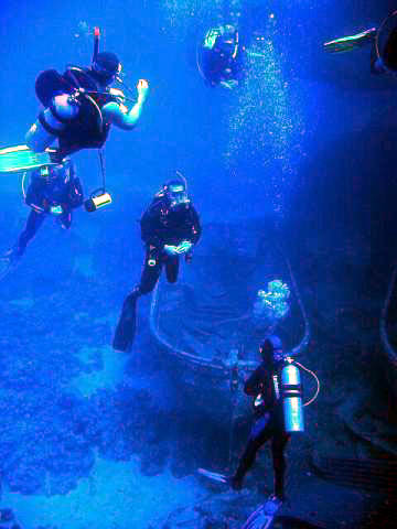 A group of scuba divers about to explore a shipwreck