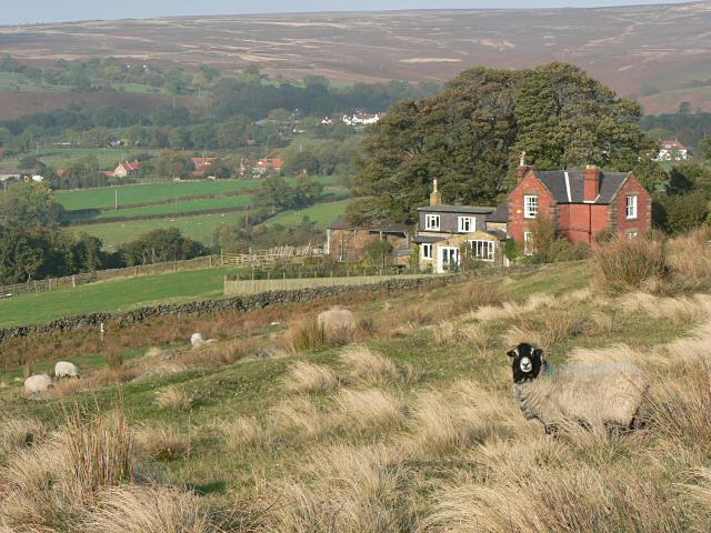 Sheep and houses - geograph.org.uk - 71012