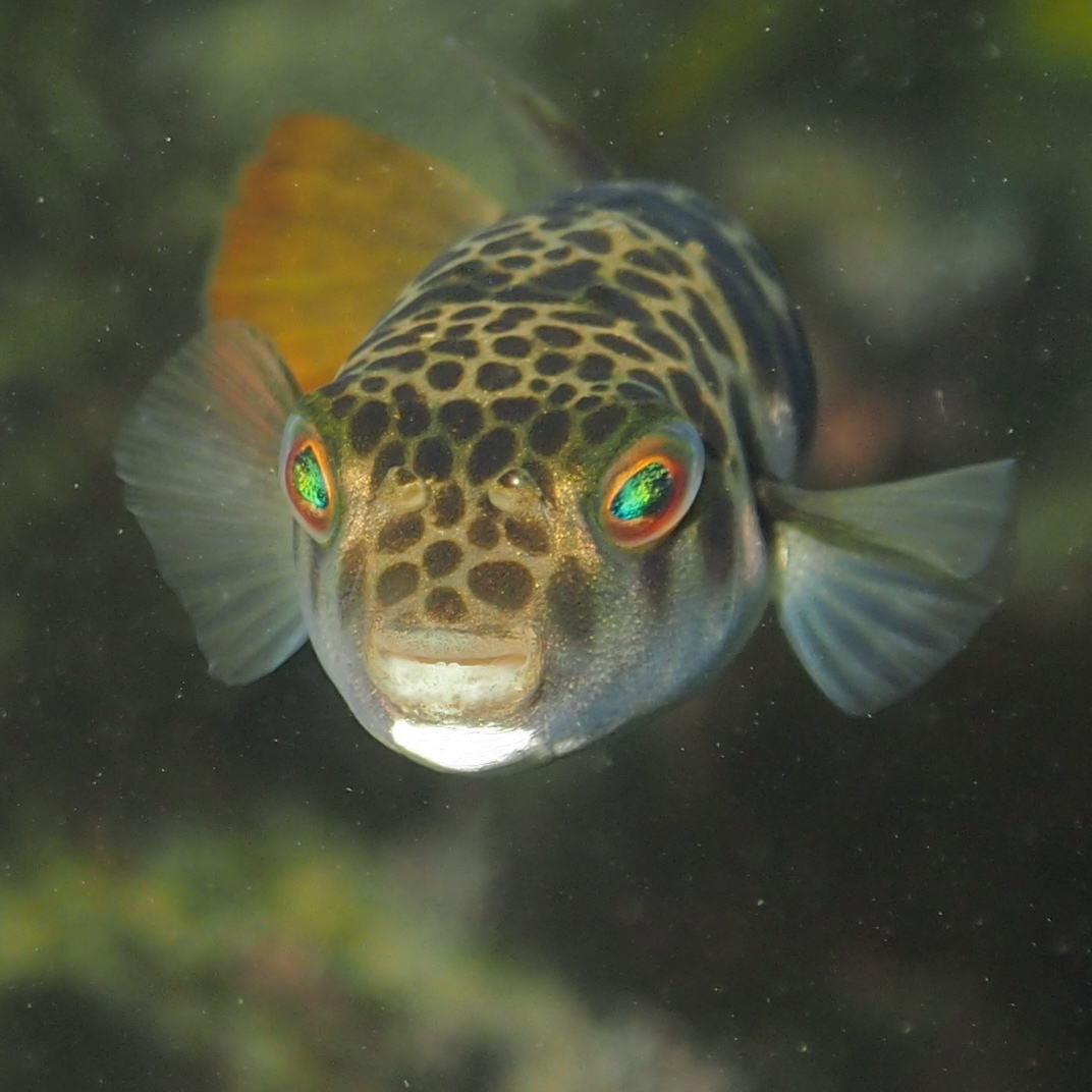 toad fish - photo #2