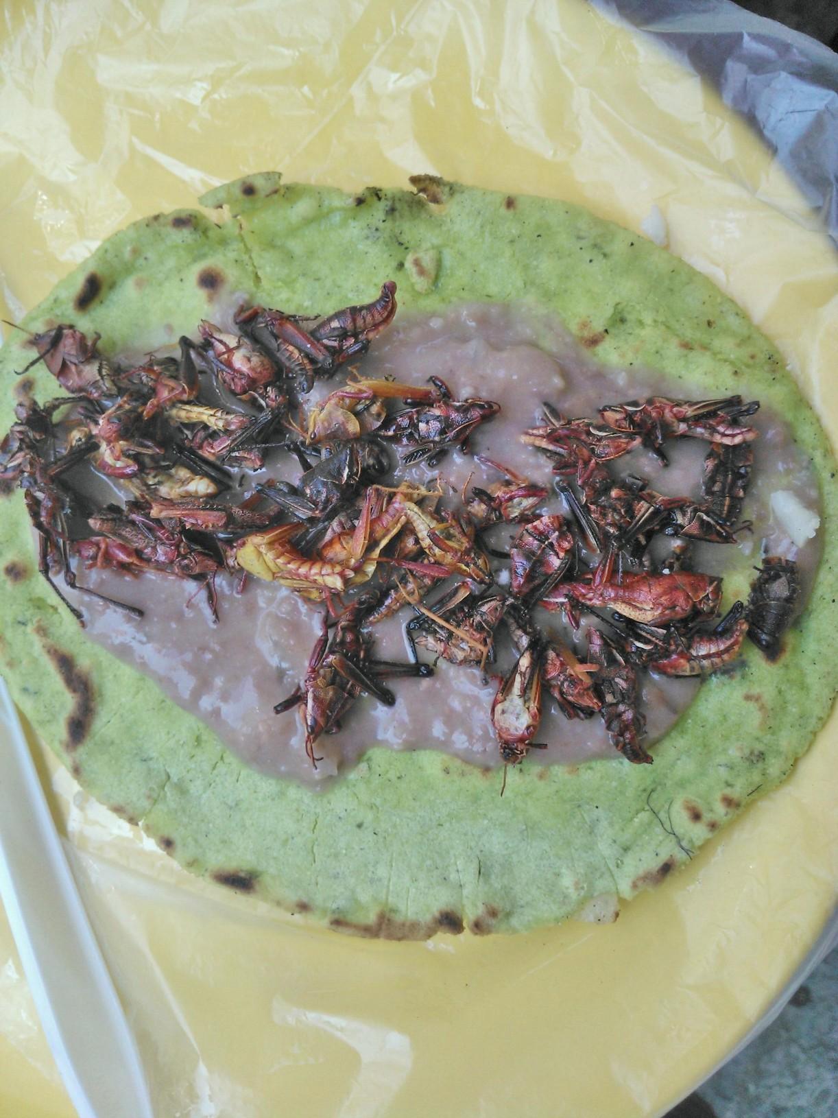 """Résultat de recherche d'images pour """"cricket tacos"""""""""""