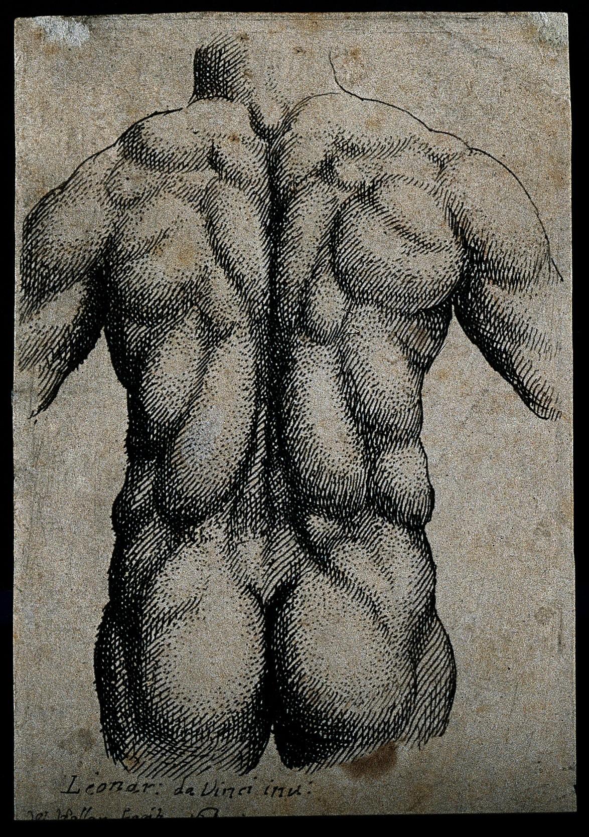 File:Leonardo da Vinci; engravings of anatomical drawings Wellcome ...