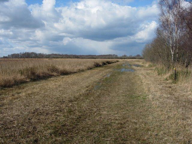 Track through Wicken Fen - geograph.org.uk - 738216