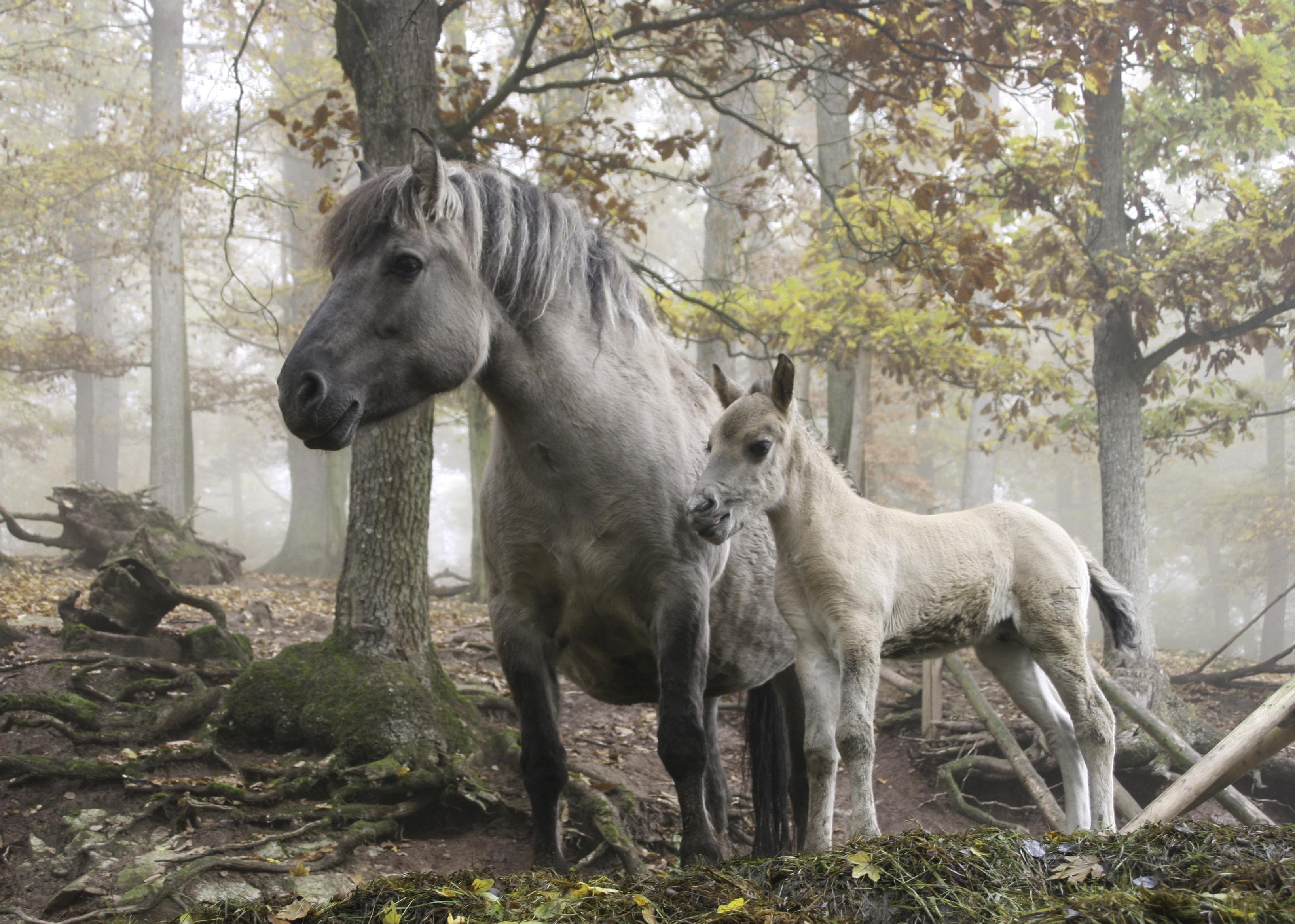 الخيول البرية, ألمانيا, أجمل الصور الطبيعية,