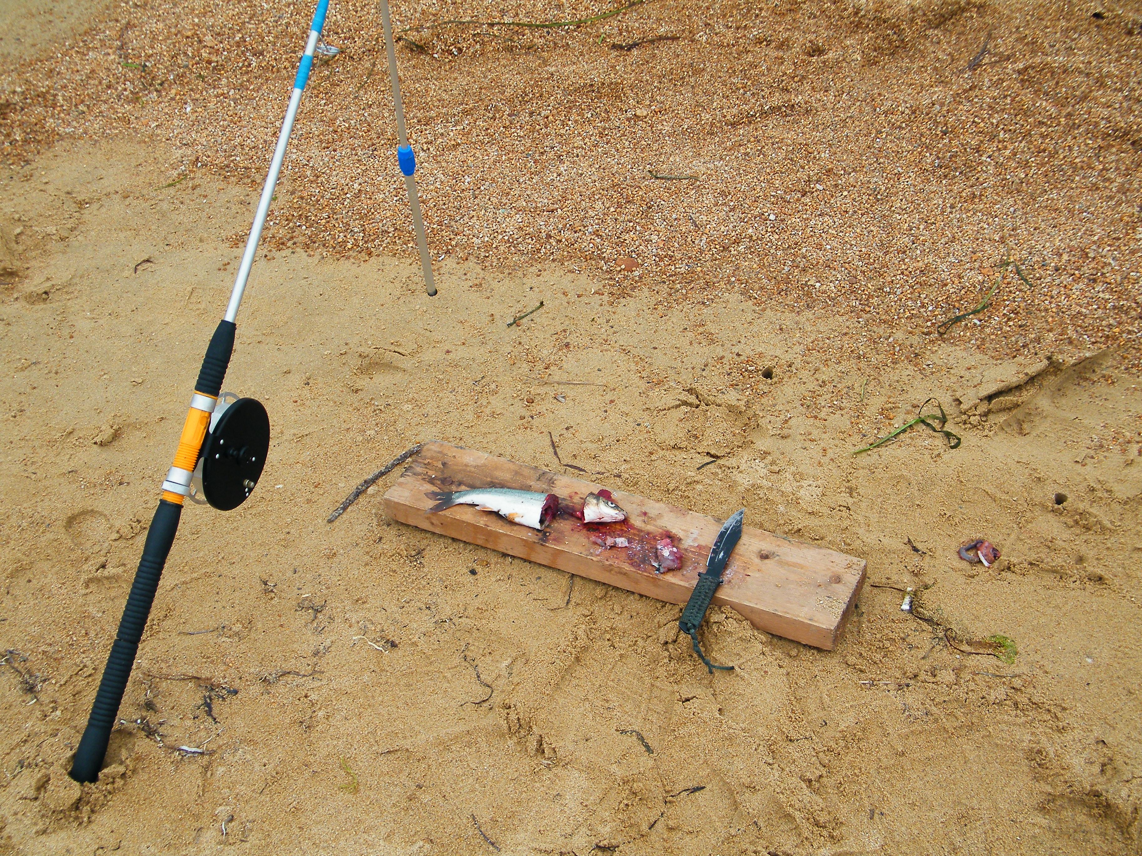 прикормка для белого амура в русской рыбалке