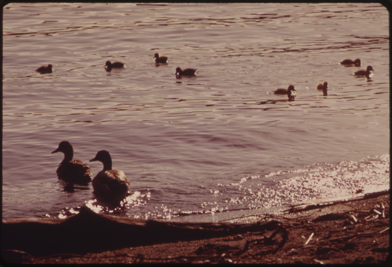 dating in bay lake florida