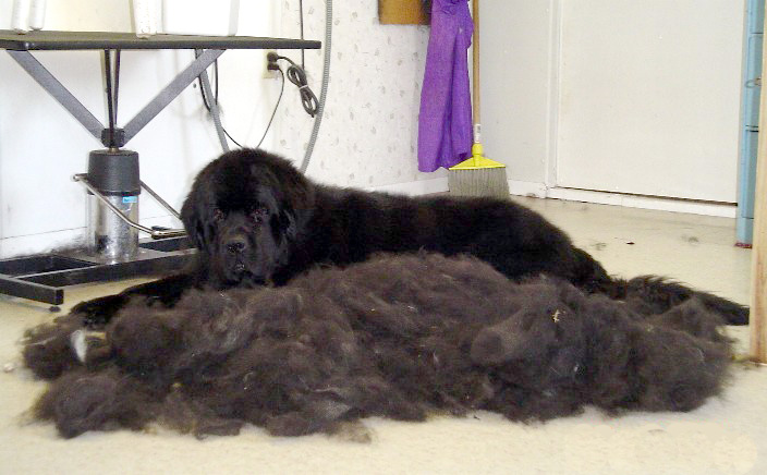 to pet pets shedding sheds excessive too is much s if illness your dog petmd of hair conditions sign how a skin know