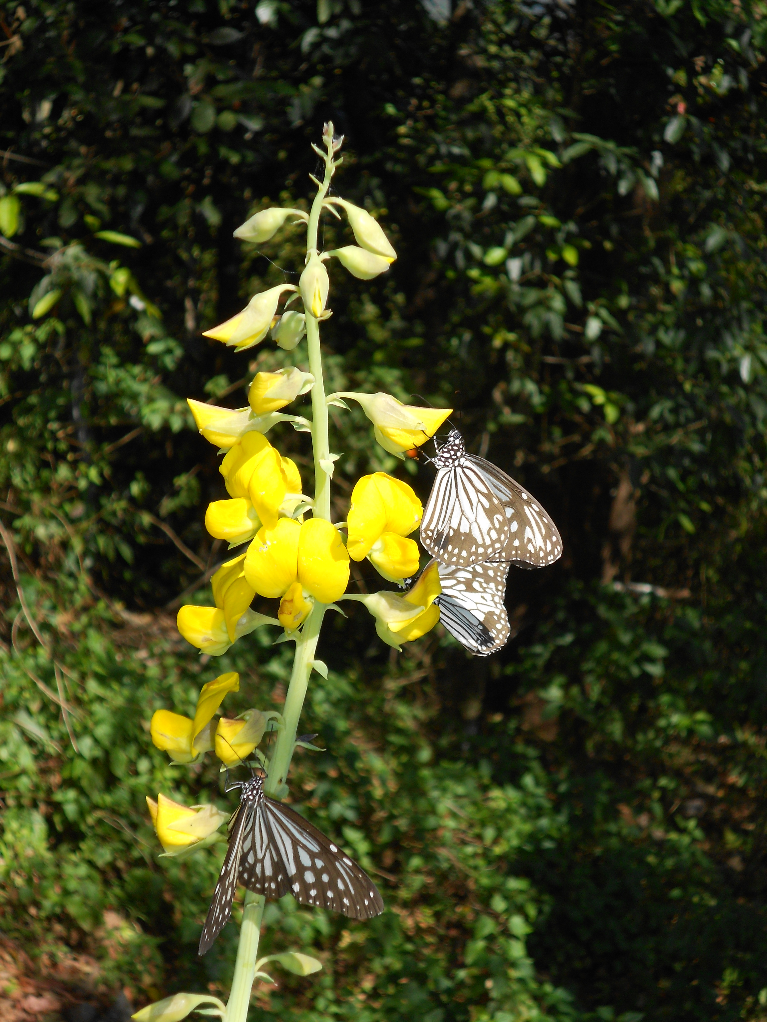 Butterflies inside Silent Valley National Park