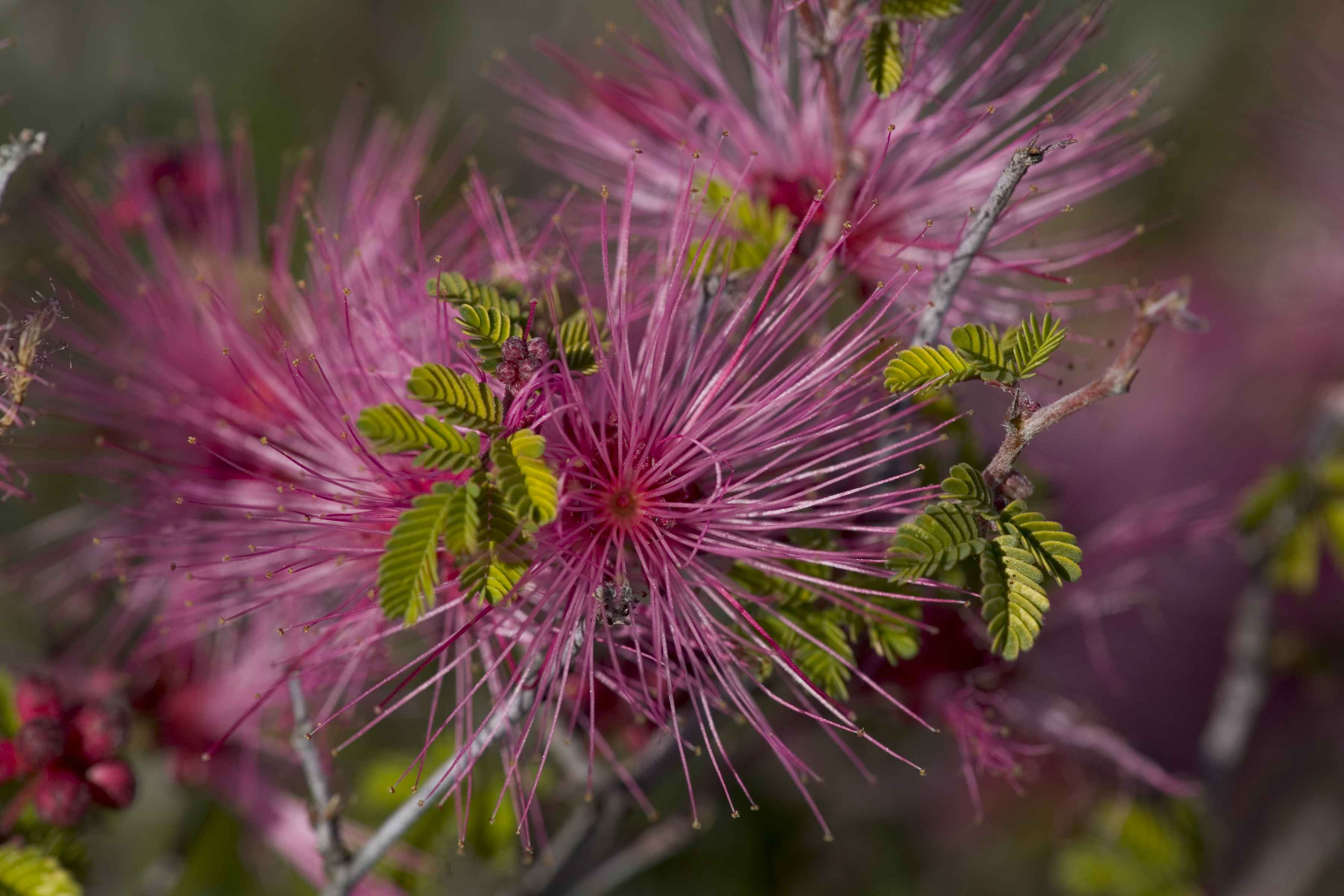 Beautiful Flowers Pictures Flower Slideshow Nature