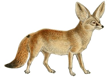 Books about Foxes