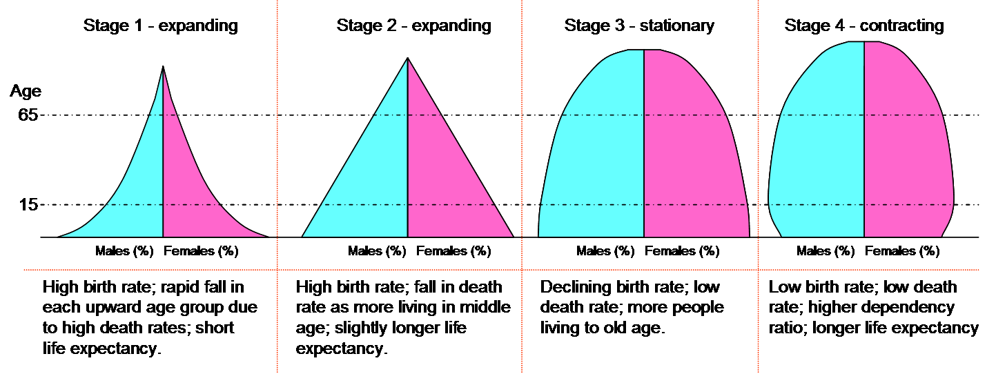 Demographic Transition Model by will Sumerfield on Prezi