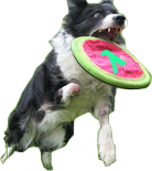 Gitit logo: dog catching frisbee