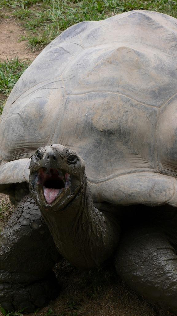 Harriet tortoise Wikipedia