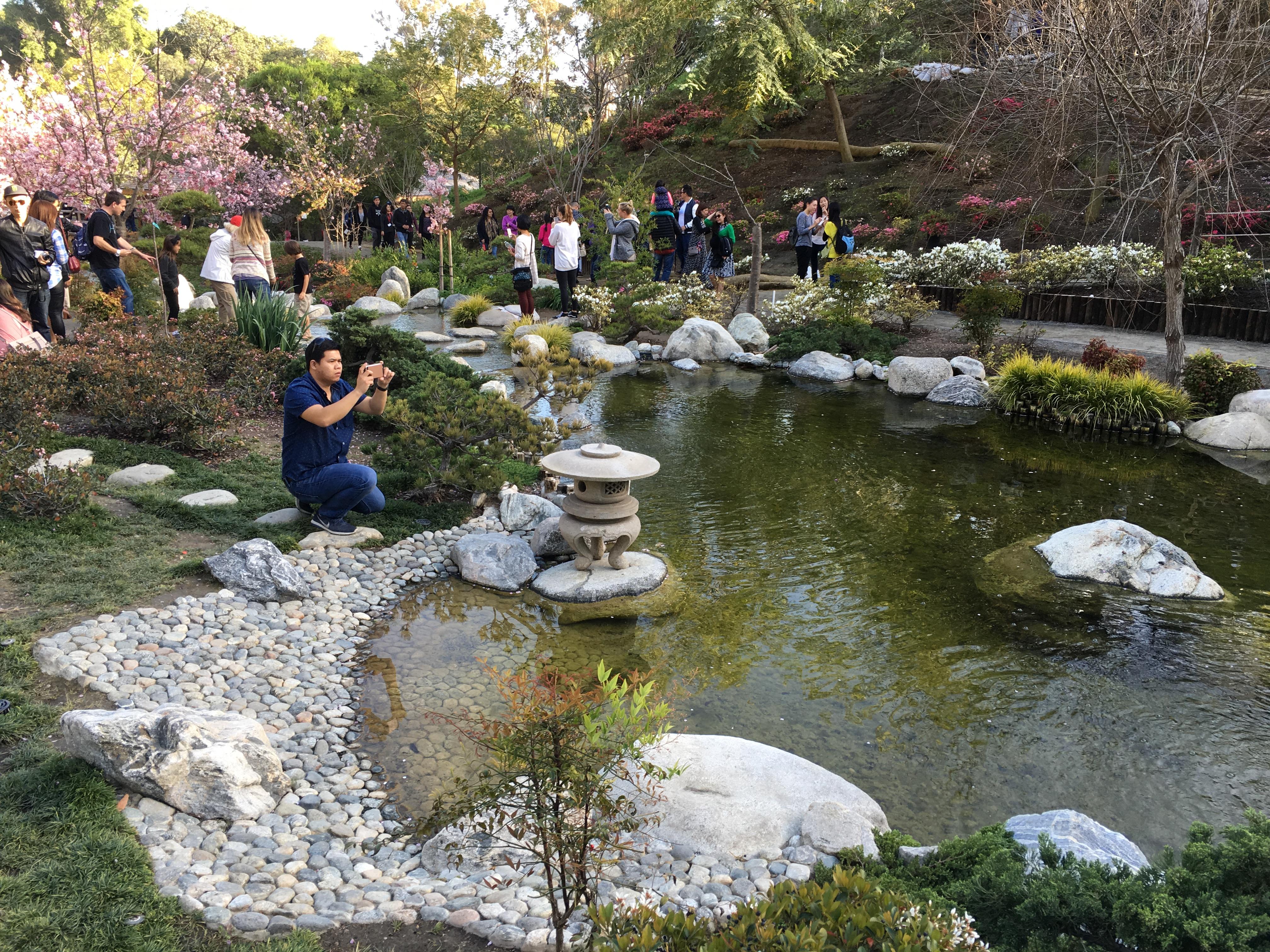 Anese Tea Garden Balboa Park Garden Ftempo
