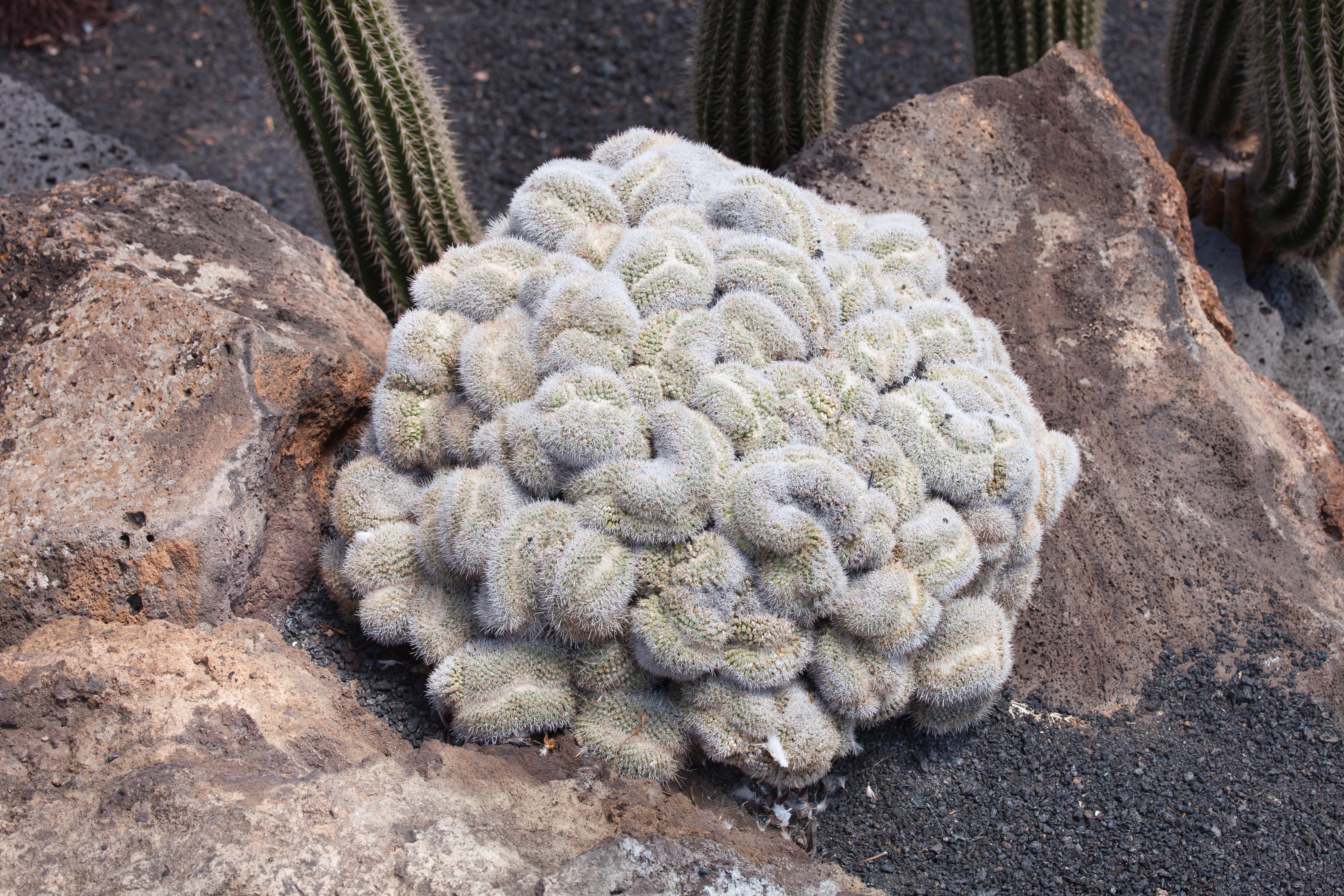 filejardn de cactus lanzarote jjpg