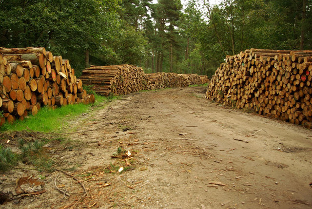 Logging in Wykeham Forest - geograph.org.uk - 1226569