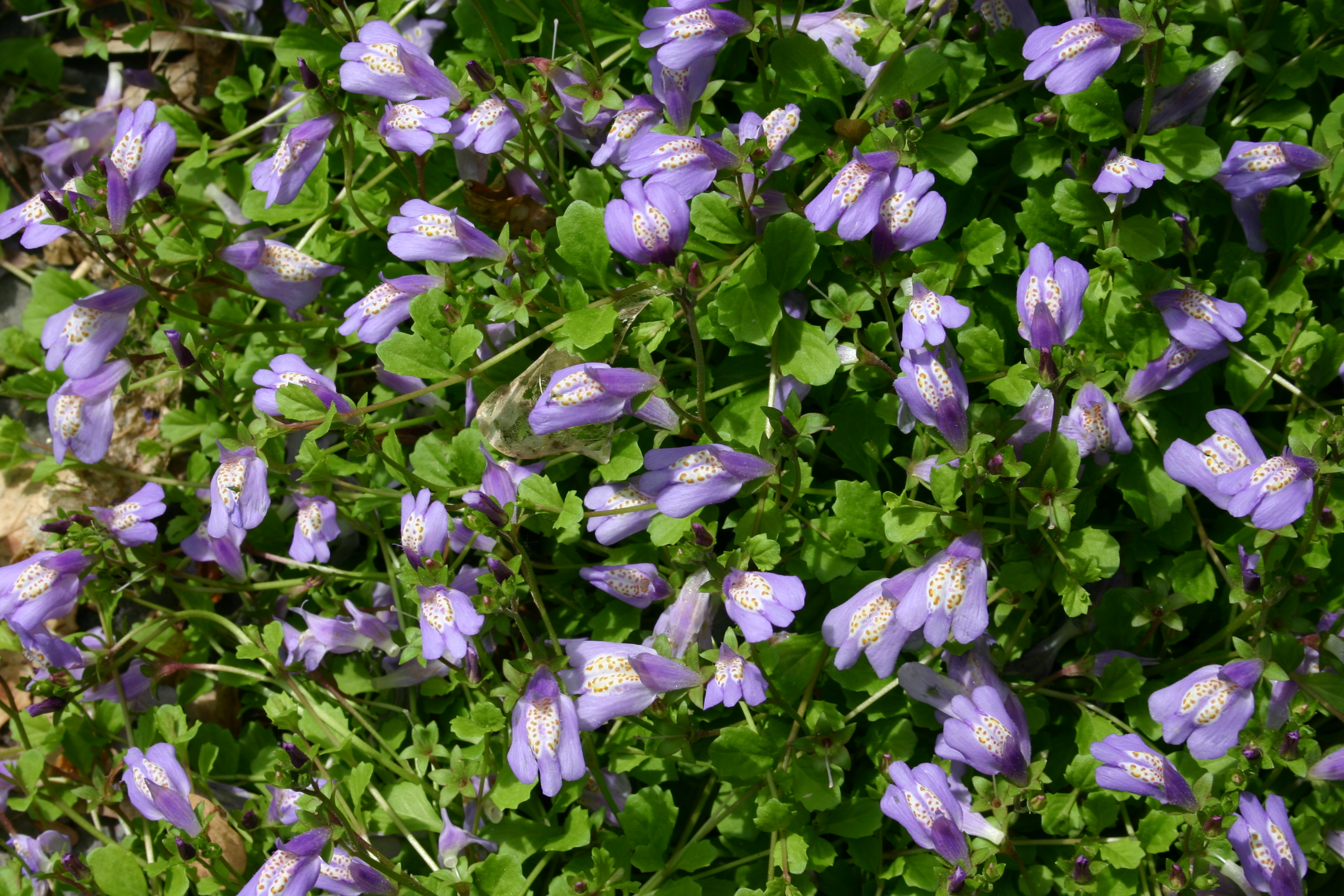 The Best Flowering Ground Covers
