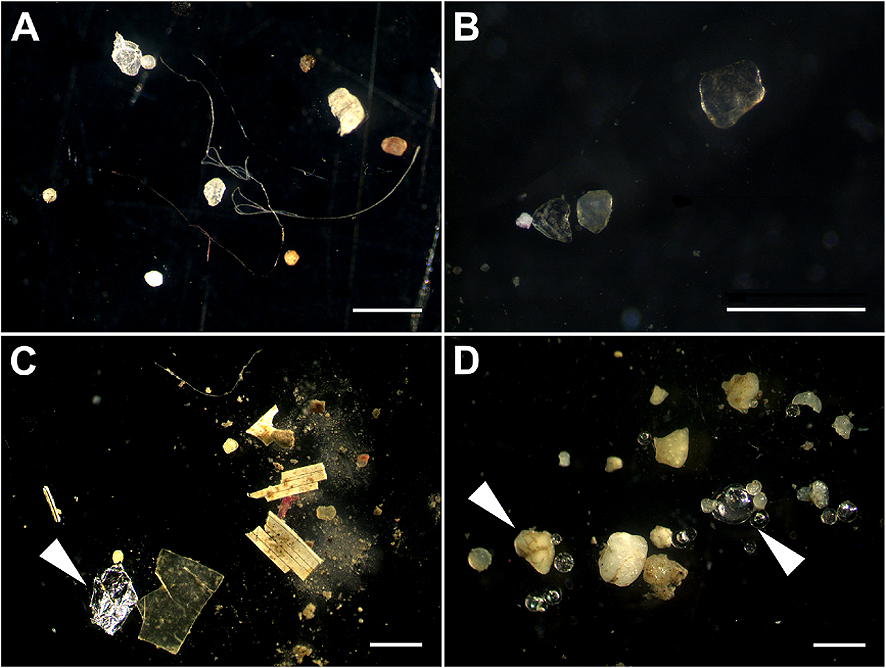 Microplastics in sediments