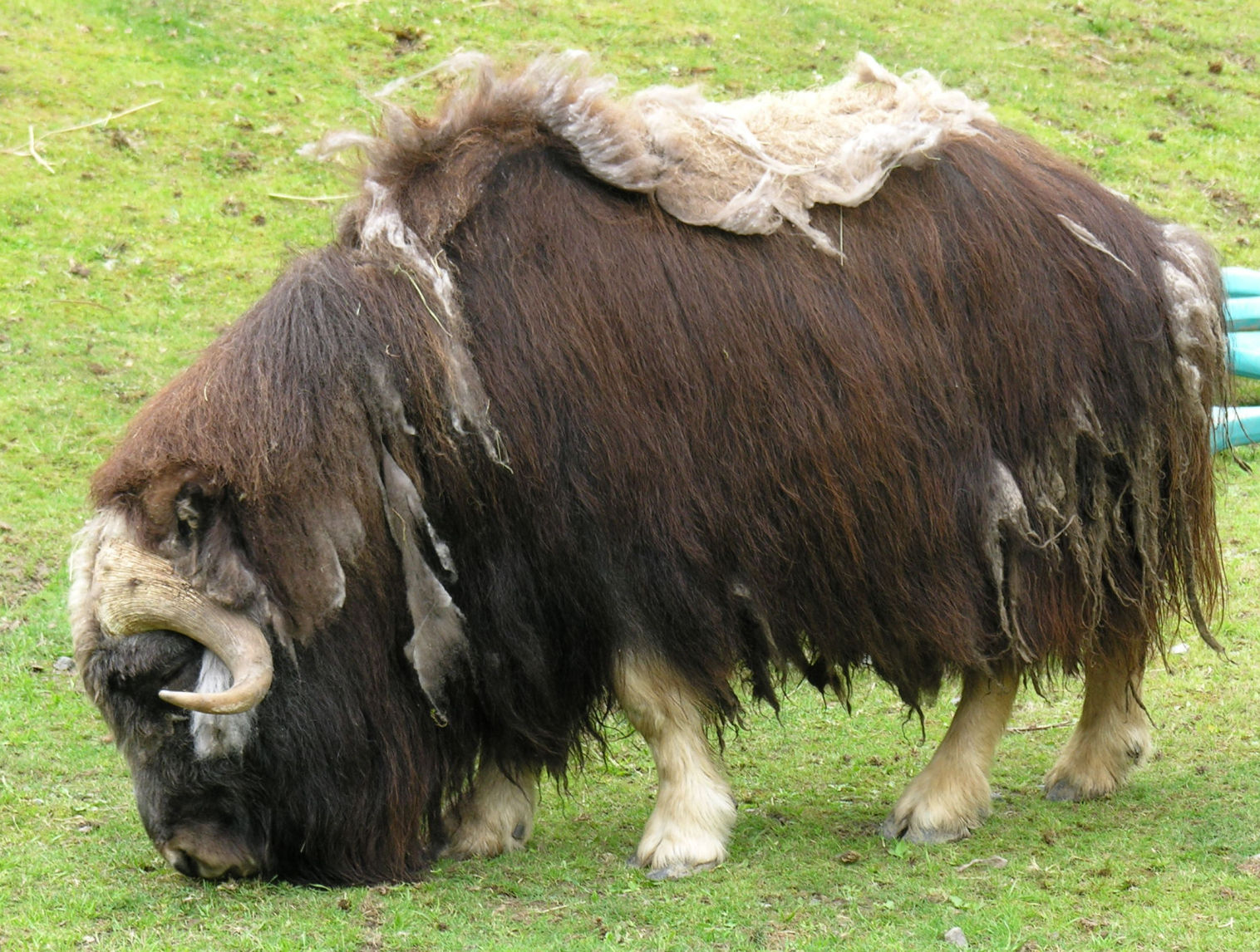 Ox And Bull Food Truck Menu