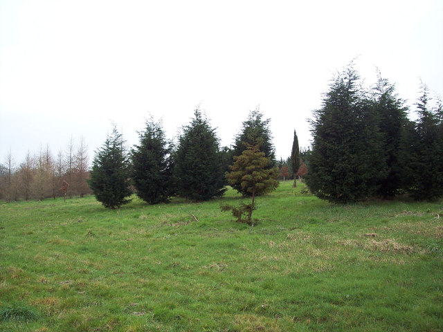 New arboretum in Cowdray Park - geograph.org.uk - 405434