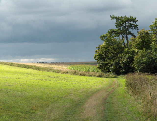 On the downs above Lockinge - geograph.org.uk - 228372