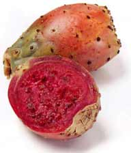 Prickly pear CDC