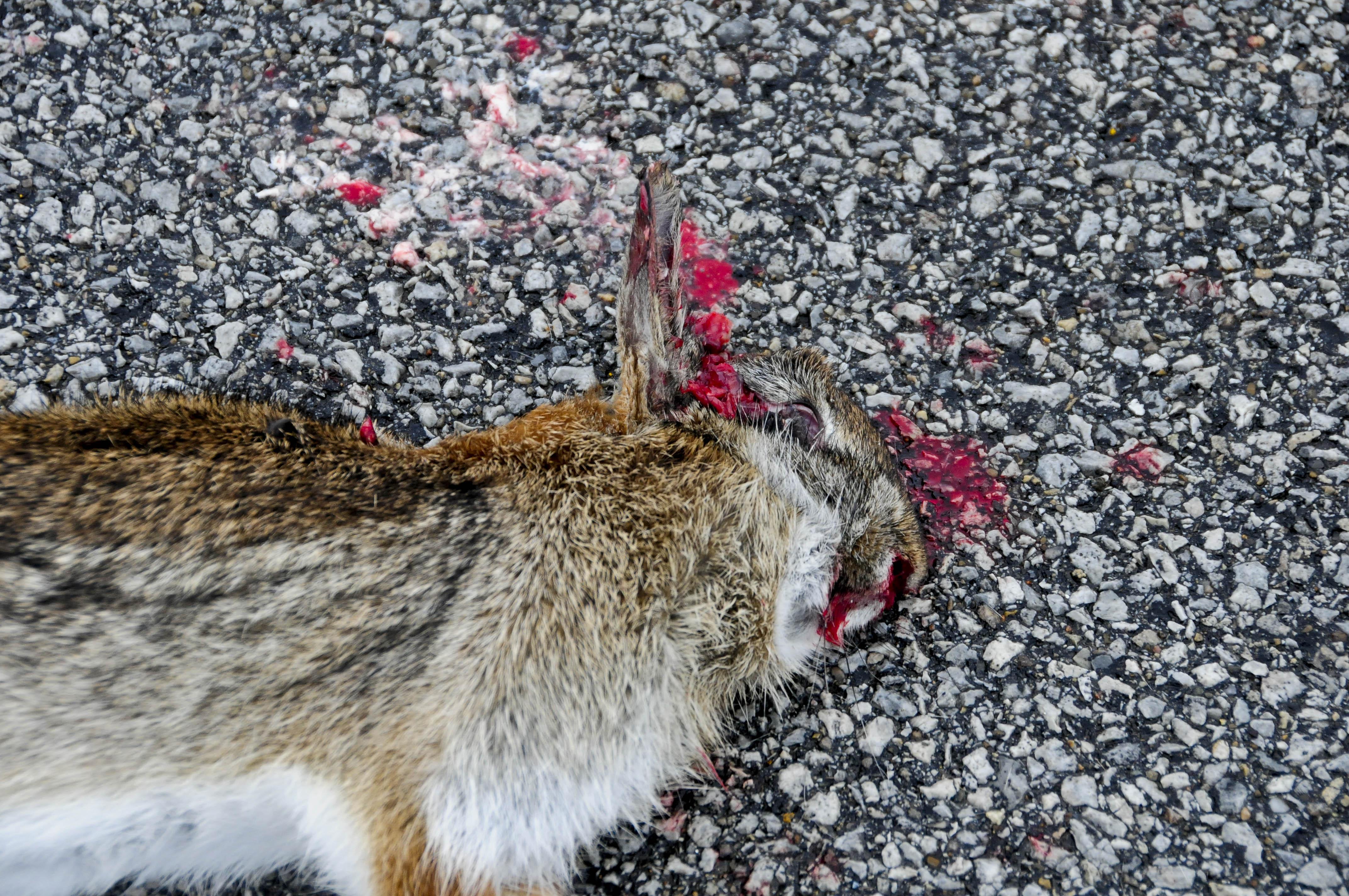 Убить зайца картинки