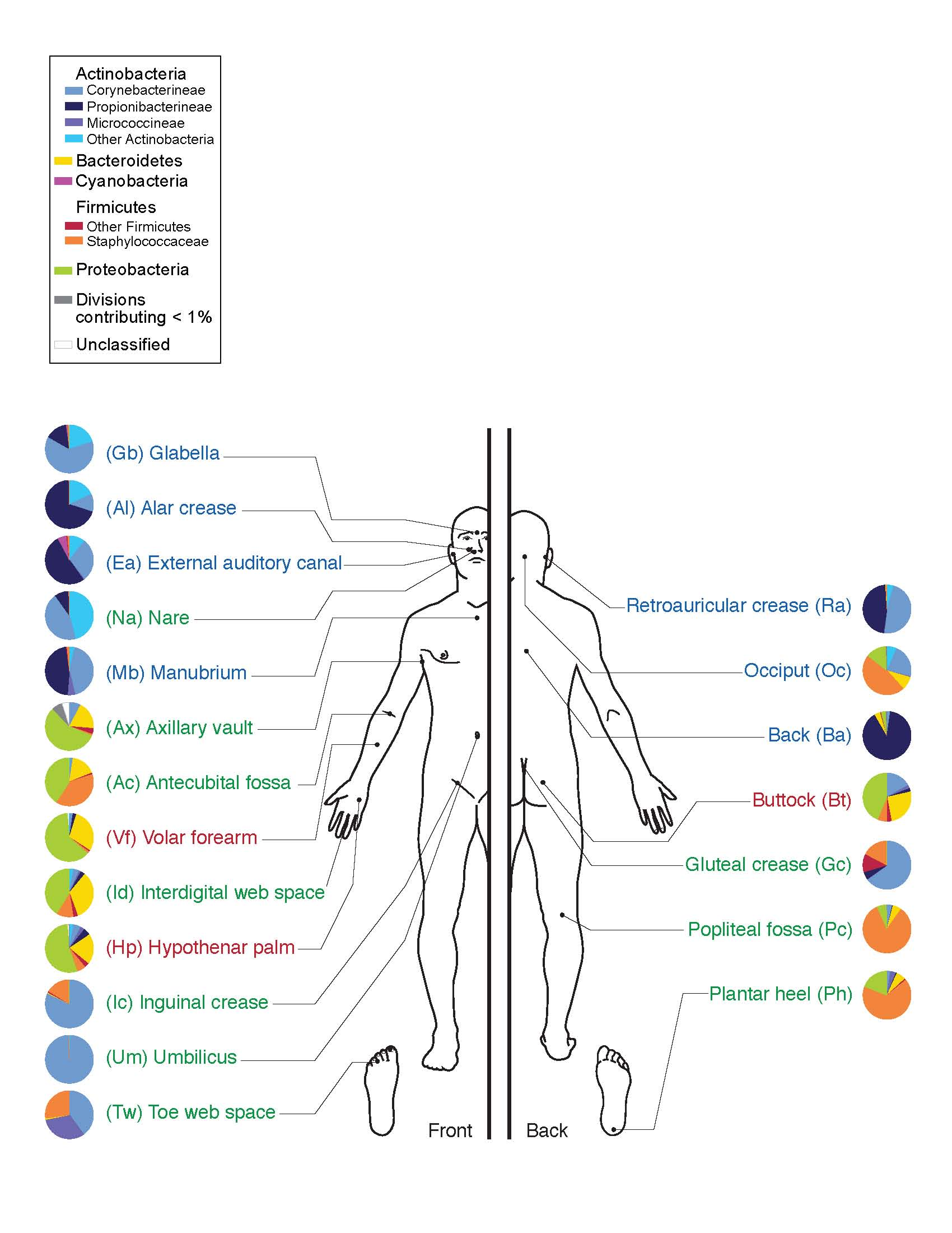 [Image: Skin_Microbiome20169-300.jpg]
