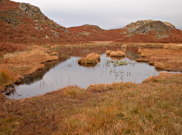 Small Tarn on Loughrigg Fell - geograph.org.uk - 2169639