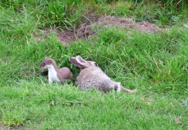 Killing Wild Animal Stalking Livestock On Private Property In Nm