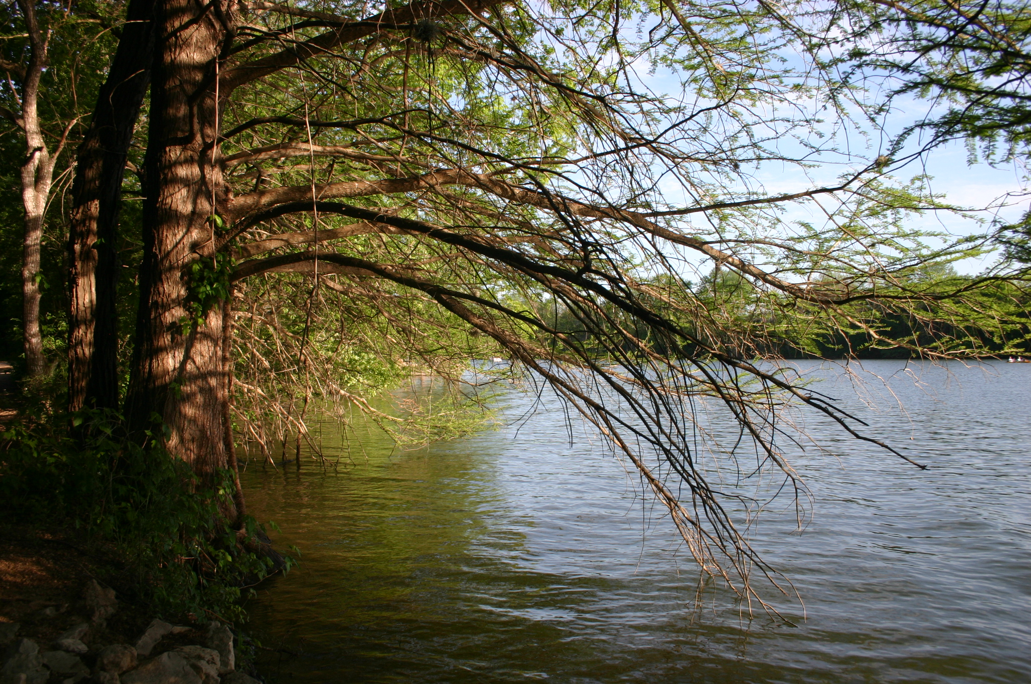 Tree Planted By Streams Of Water Filetree