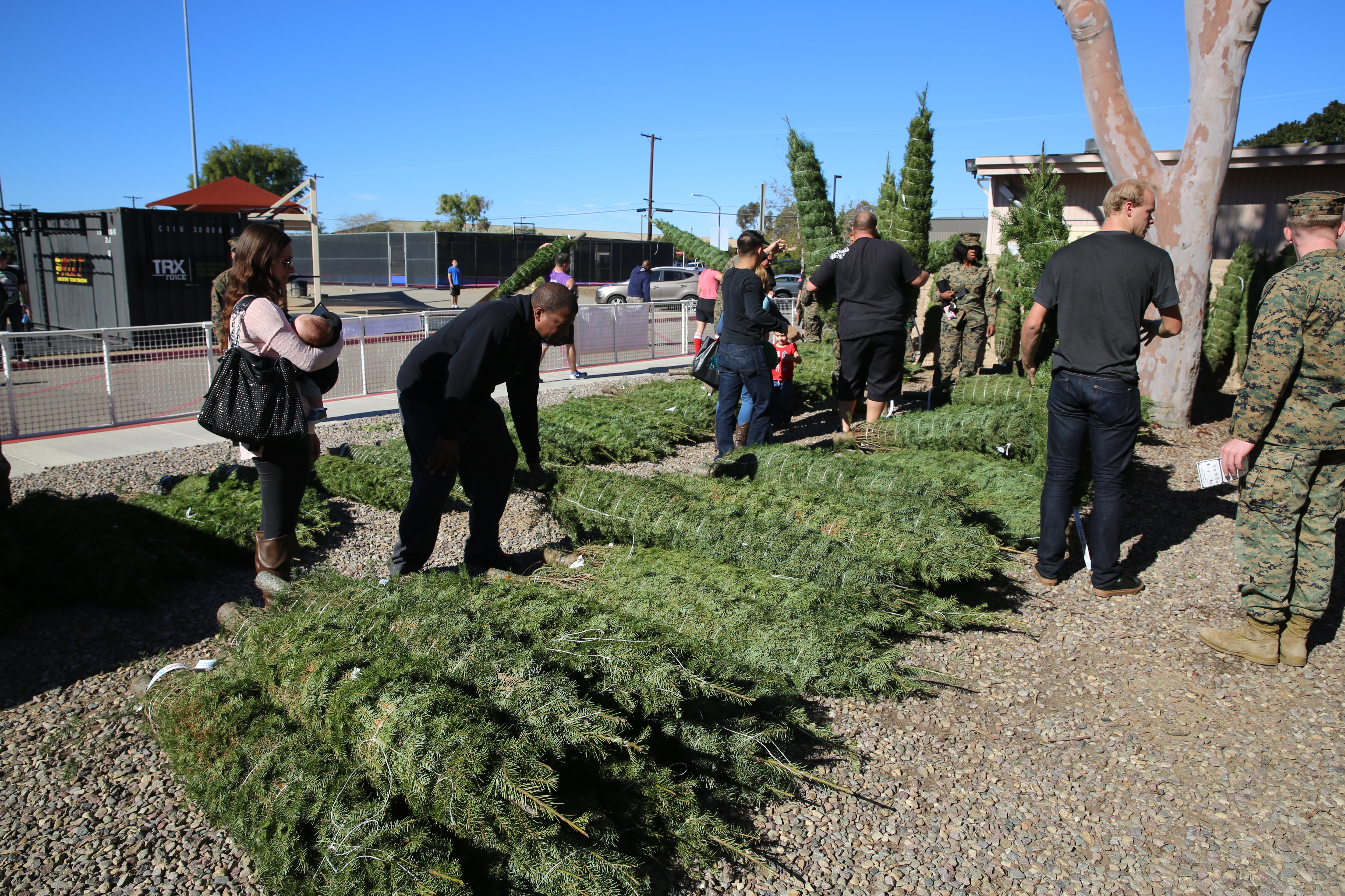 file tree giveaway spreads holiday cheer through mcas miramar 151202 rh commons wikimedia org
