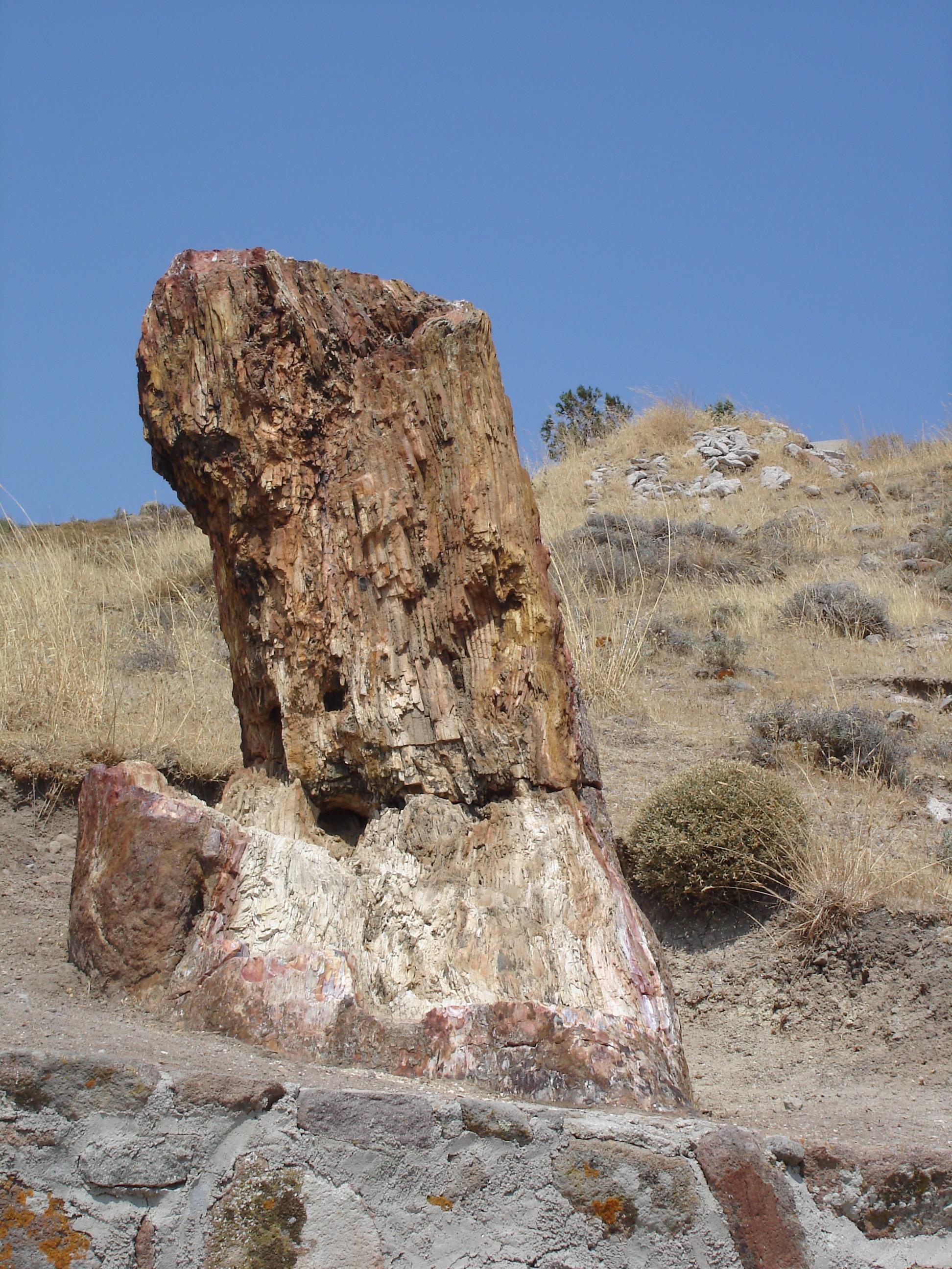 Που χρονολογείται από το φύλλο εργασίας αρχείο απολιθωμάτων
