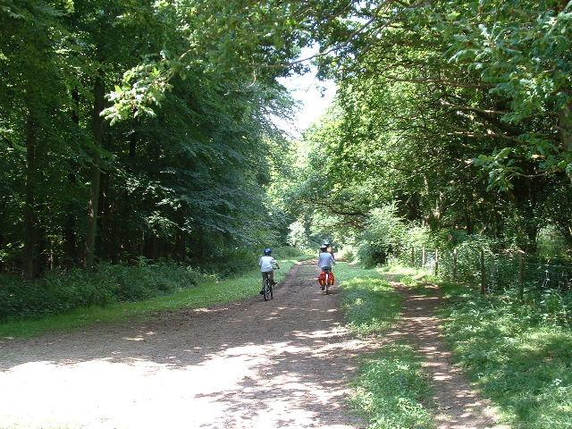 Woodland Bridleway - geograph.org.uk - 21775