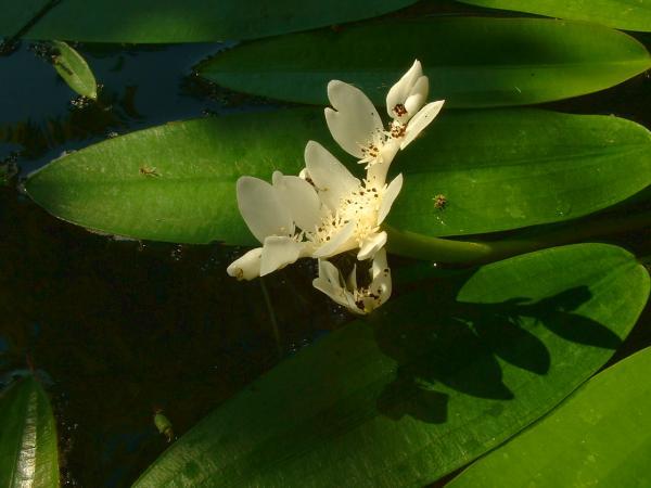 The Pond (5/5)