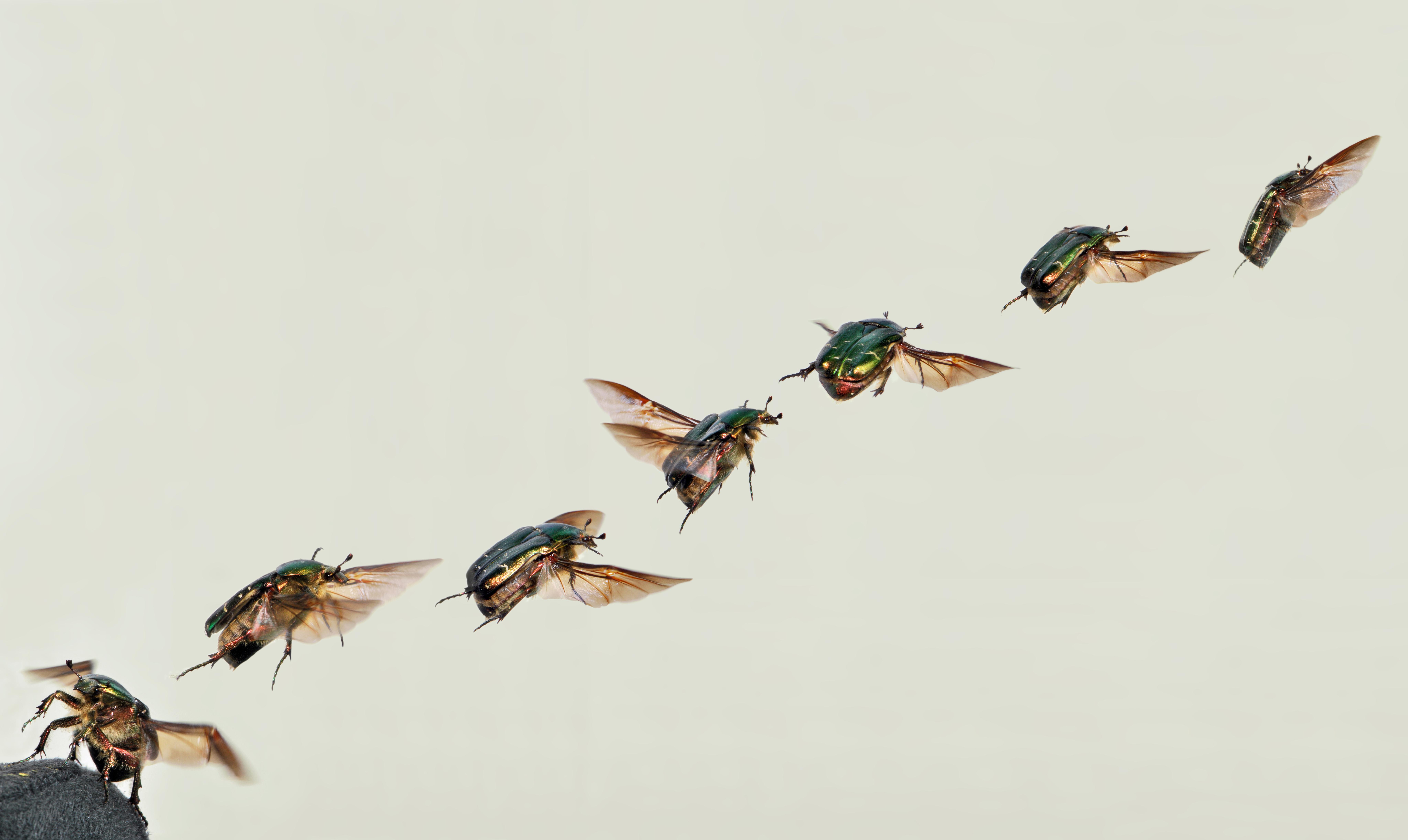 Fliegen In Der Wohnung Winter