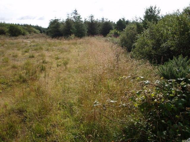 File:Edge of woodland near Hardisworthy - geograph.org.uk - 511254.jpg