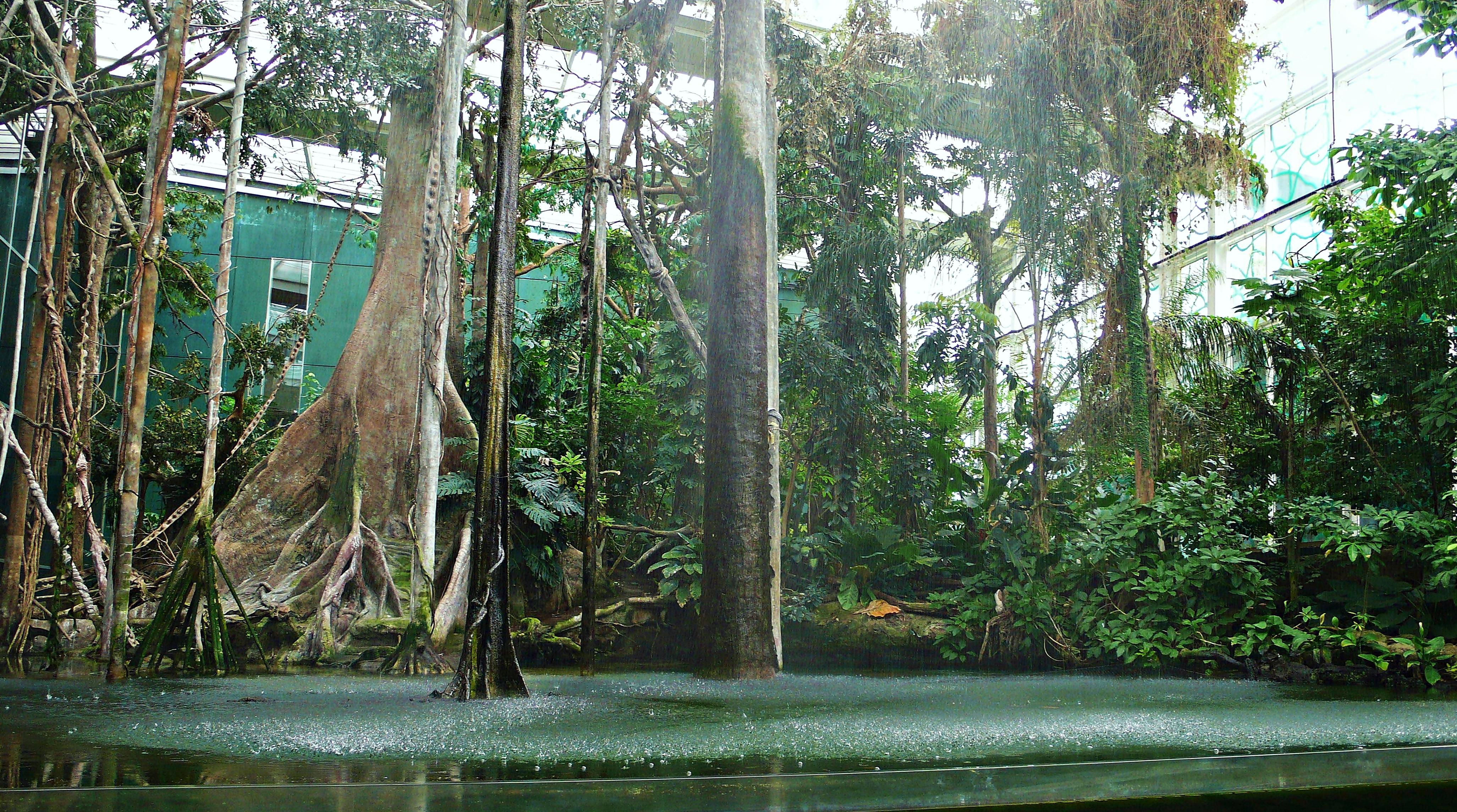 File:El bosque inundado amazonico-cosmocaixa-2009 (5).JPG - Wikimedia Commons