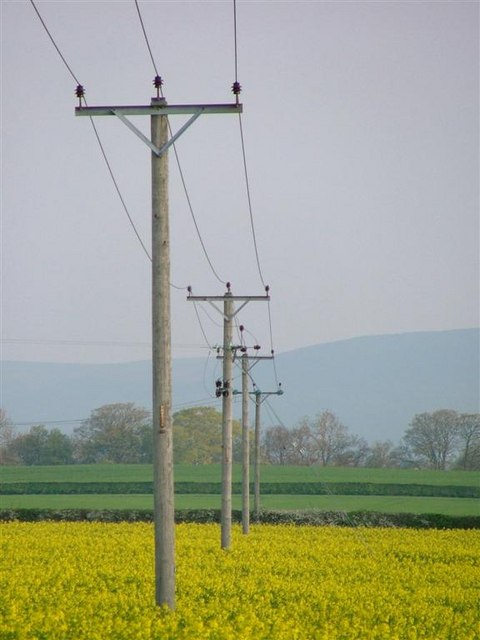 File:Electricity Poles, Field of Rape - geograph.org.uk ...