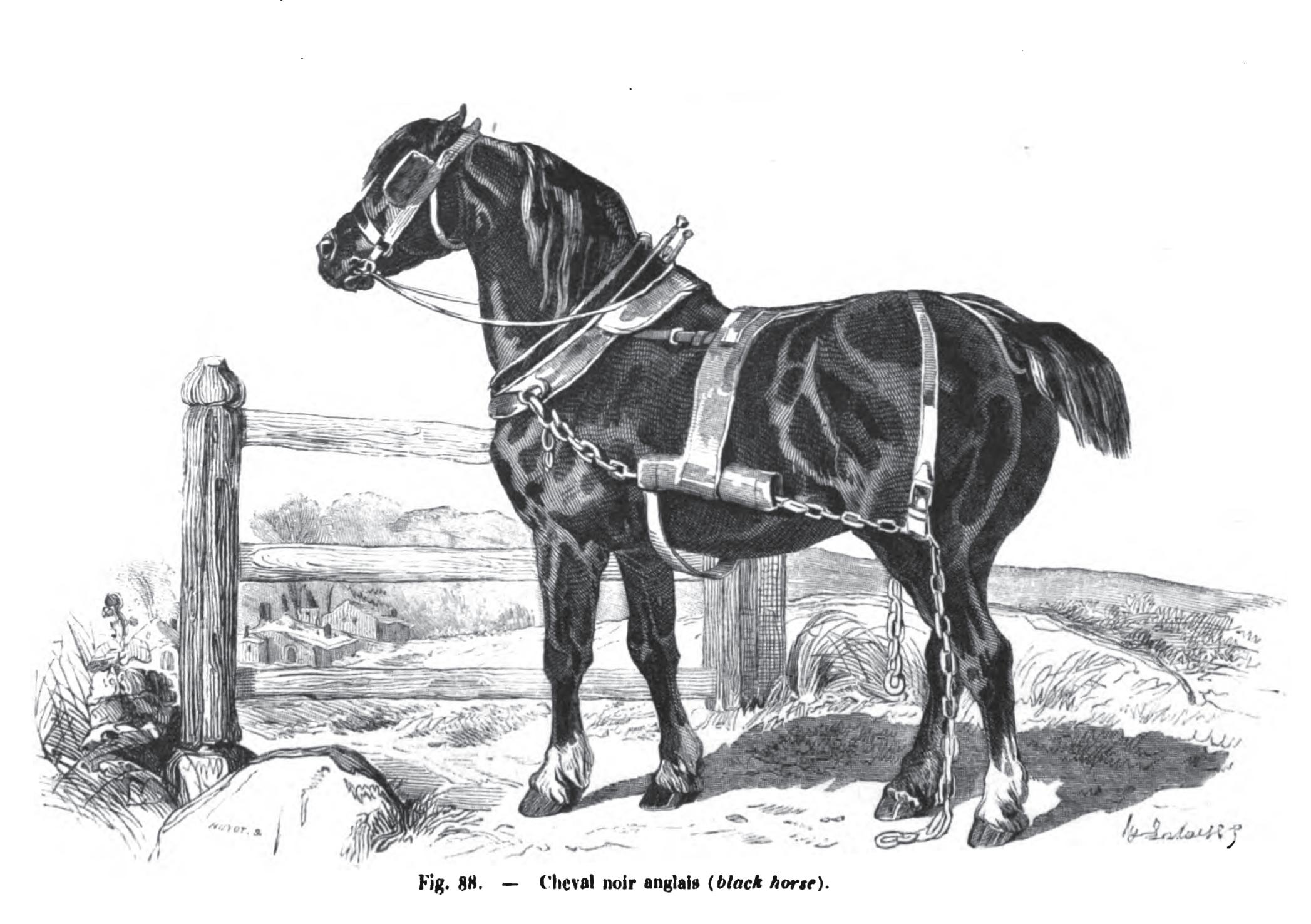 Old English Black Wikipedia