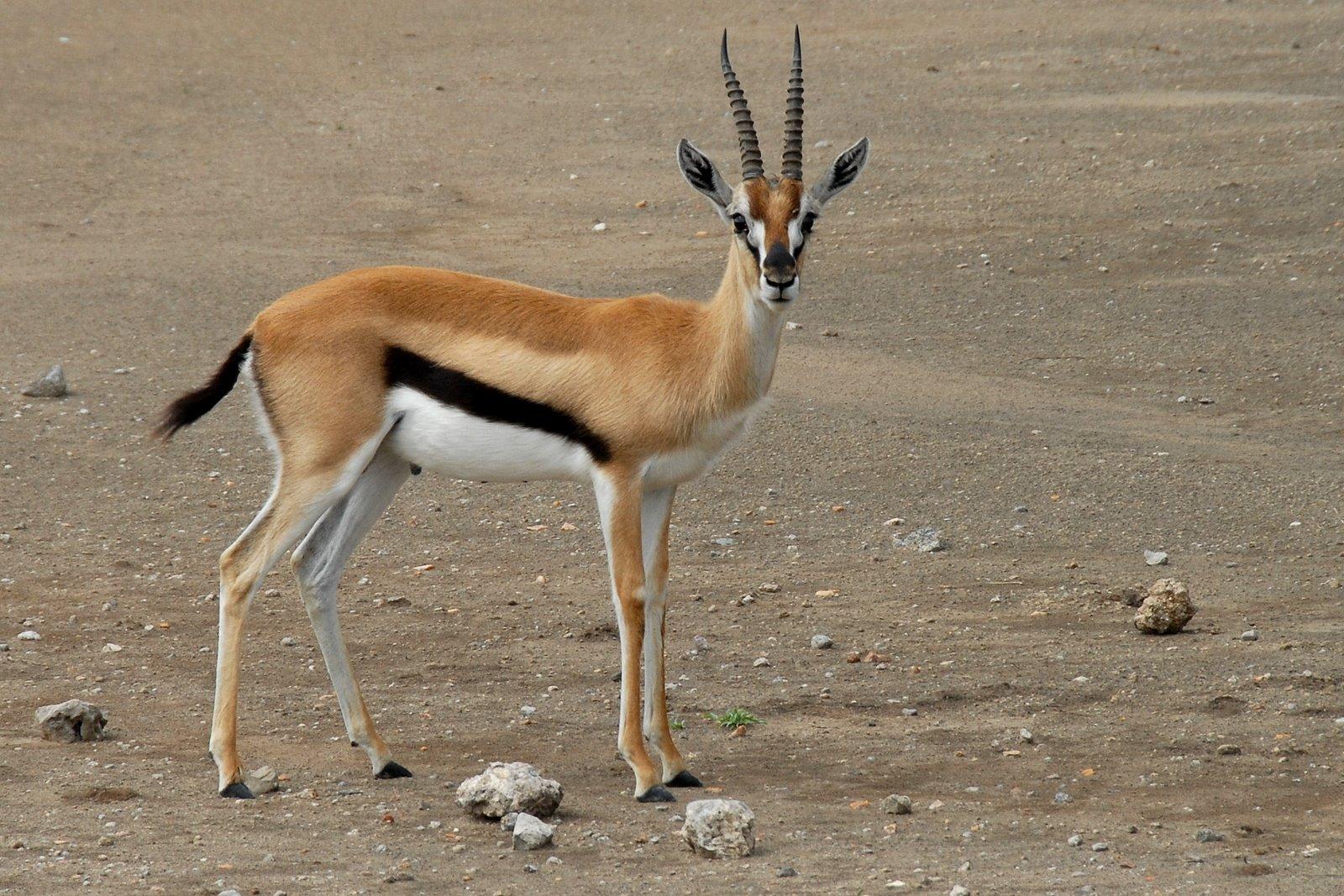Serengeti National Park >> Google Images