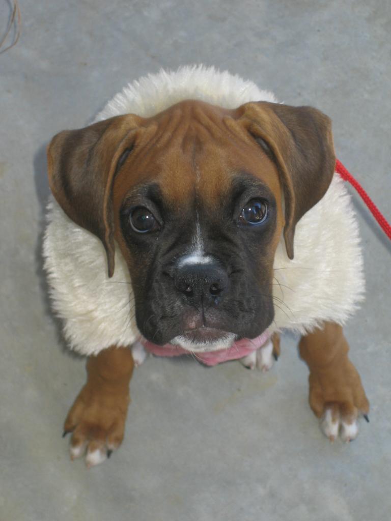 Winter Dog Coat Dressing Large Breed Labrador Cheap
