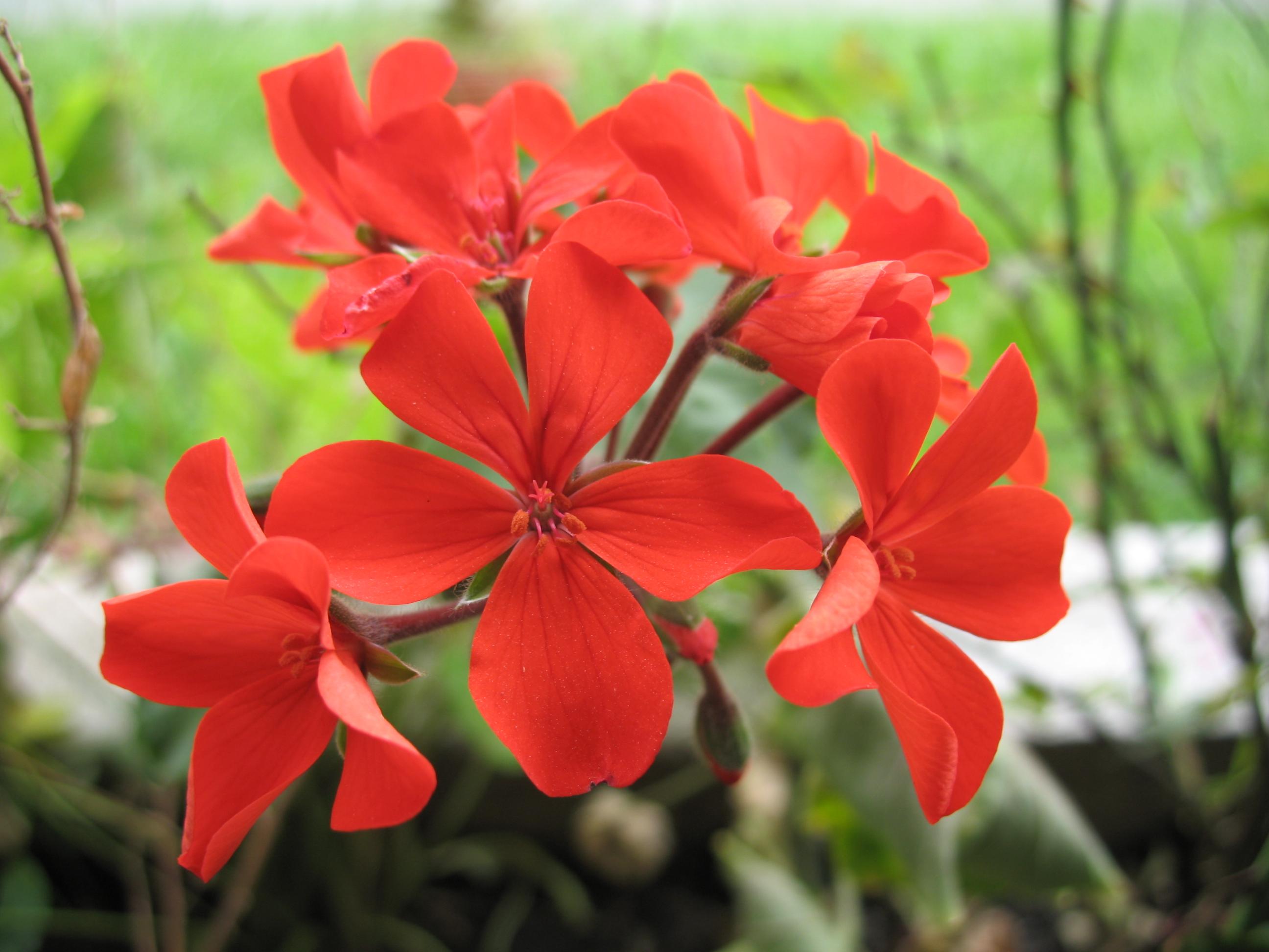 Flora of Honduras