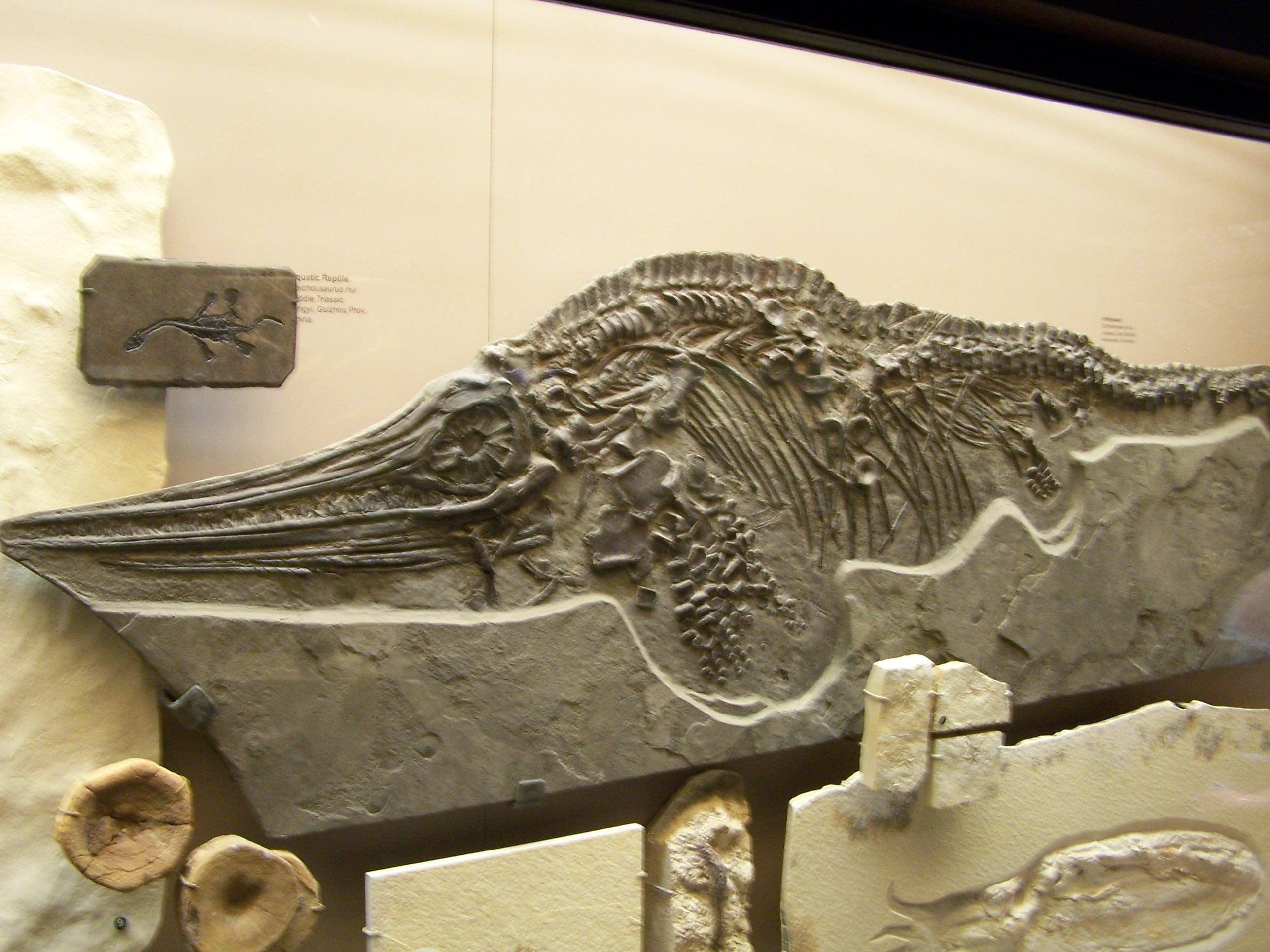 ichthyosaur fossil - photo #3