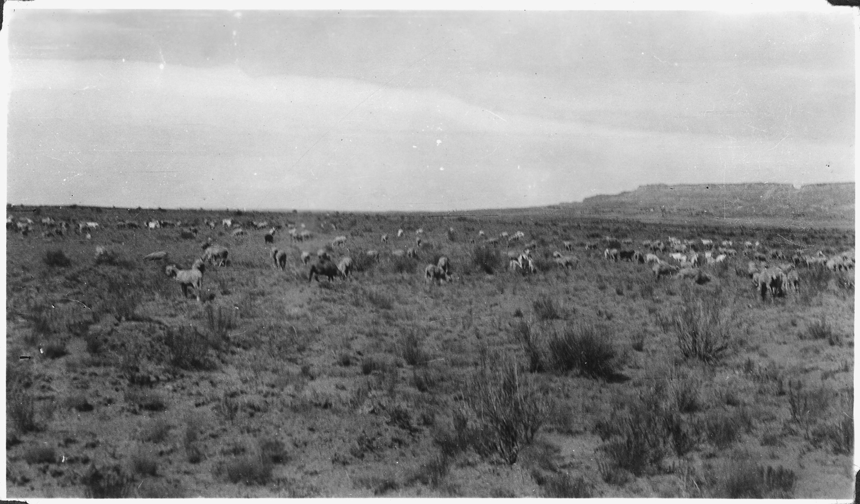 File Indian Sheep Loose Herding On Open Range Nara