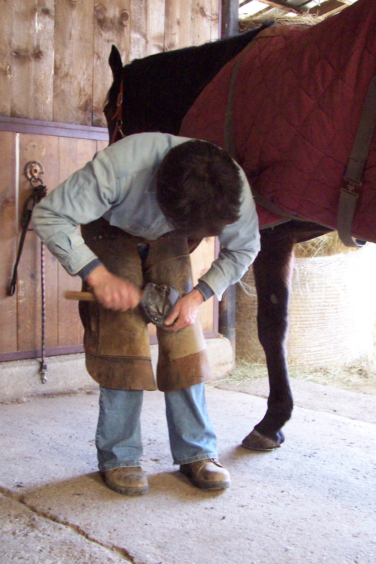 Source: https://en.wikipedia.org/wiki/Horse_care#/media/File:Italian_farrier_2006_1.jpg