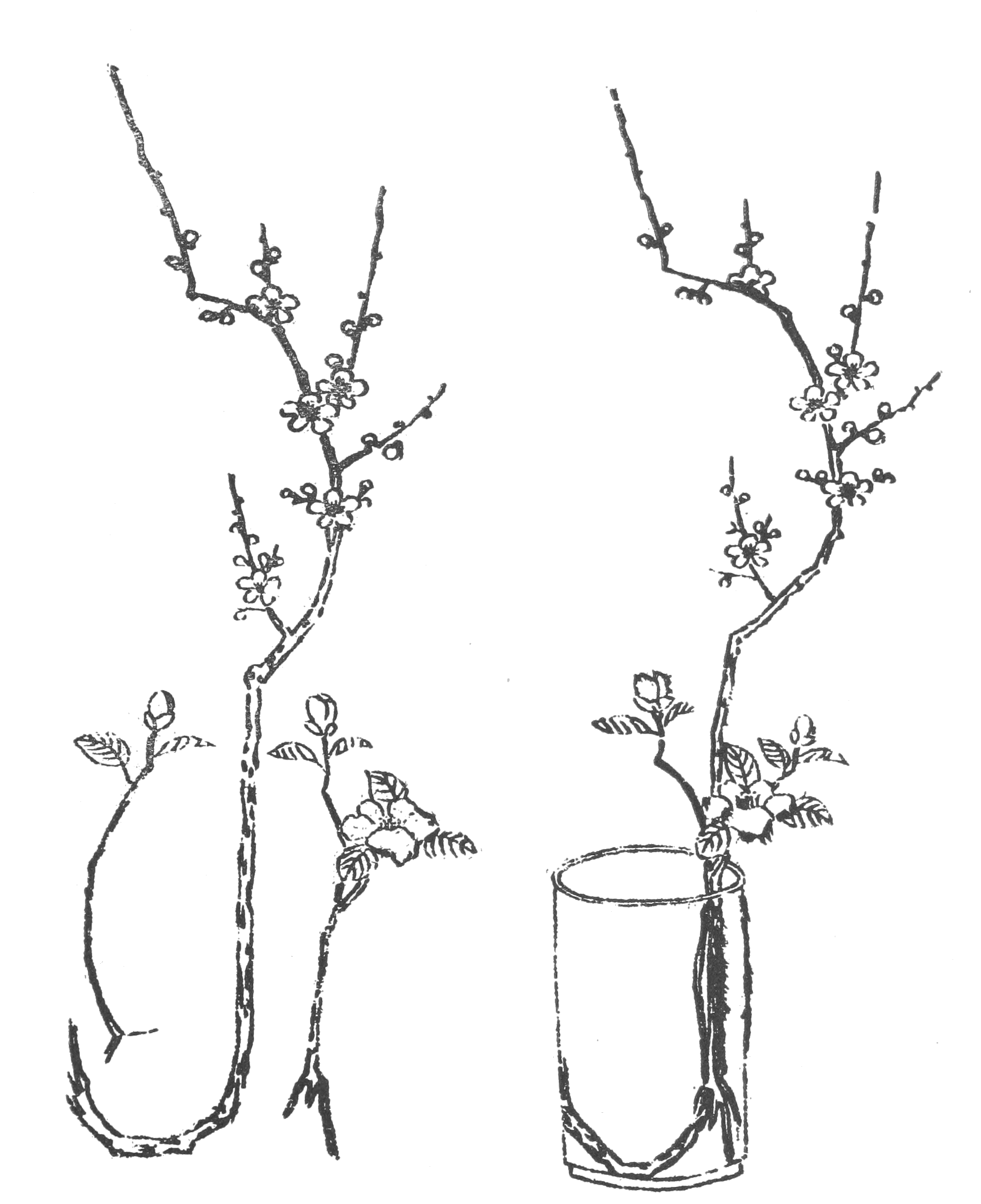 Line Drawings Of Flower Arrangements : File japanese flower arrangement p wikimedia commons