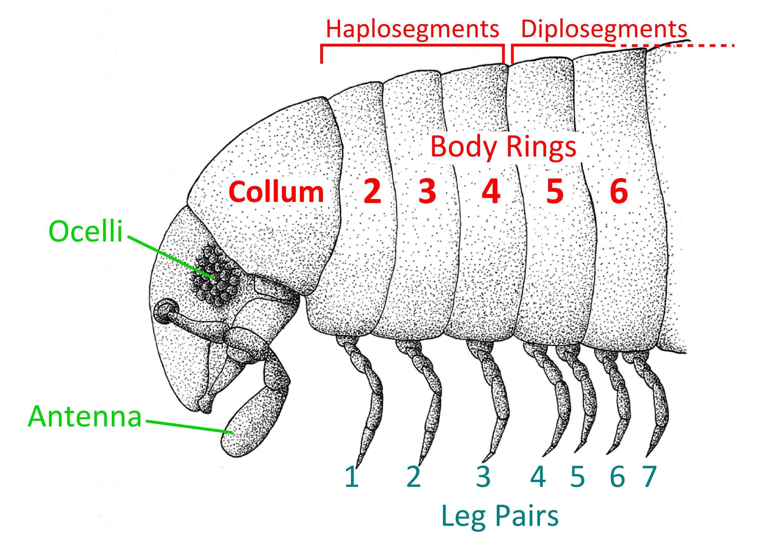 Wiki: Millipede - upcScavenger