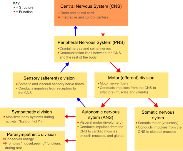 File:NSdiagram.png
