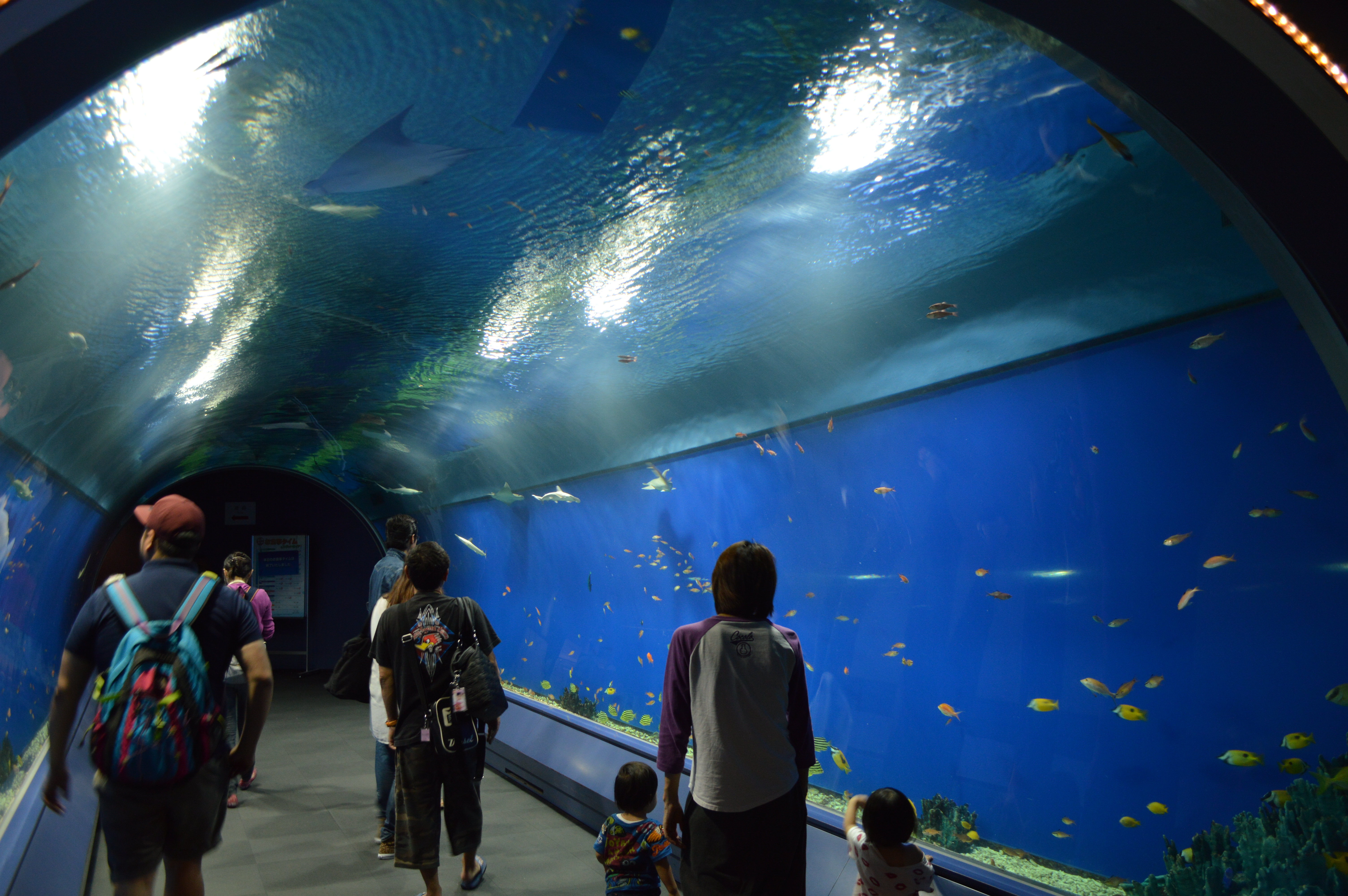 Image Result For Aquarium Of The